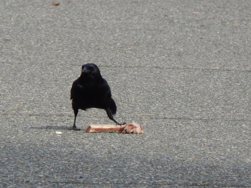 King of the Crow Bone!